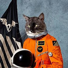 A cat is portrayed in a spacesuit in front of a flag