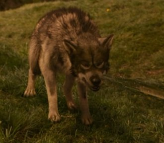 Maugrim - Maugrim, as portrayed in The Chronicles of Narnia: The Lion, the Witch and the Wardrobe