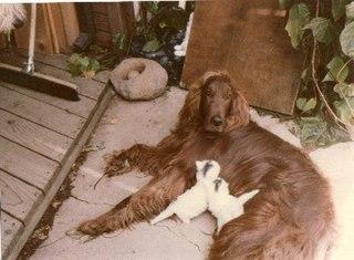 Mitt Romney dog incident