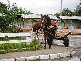 Sosnove Urban locality in Rivne Oblast, Ukraine