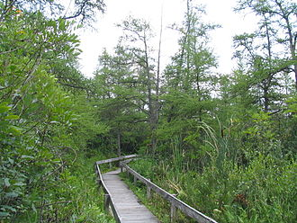 Volo Bog State Natural Area - The boardwalk trail through the tamarack zone to the bog