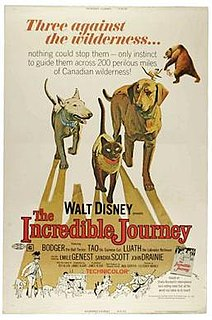<i>The Incredible Journey</i> (film) 1963 animal adventure film live-action adaptation of the novel narrated by Rex Allen
