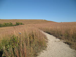 Flint Hills - A walking trail in the Konza Prairie shows the height of the grasses in the fall.
