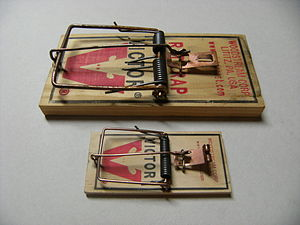 Trapping - Size comparison between two common types of spring traps:  a rat trap (above) and a mouse trap (below).