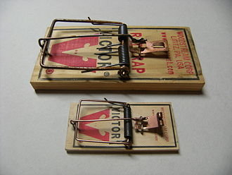 Trapping - Size comparison between two common types of spring traps: rat trap (above), and the smaller mouse trap (below).
