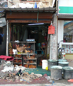 A live fowl market in Asia with live, dead and dying birds.