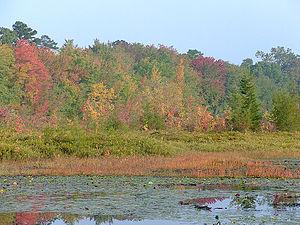 Cumberland, New Jersey - Image: Cumberlandpondinfall