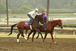 Mine That Bird, Santa Anita Park, October, 2008.jpg
