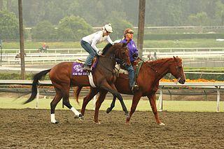 Mine That Bird American-bred Thoroughbred racehorse