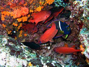 Liquid Jungle Lab - Tropical underwater habitat of the Liquid Jungle Lab