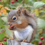 Red squirrel cropped.png