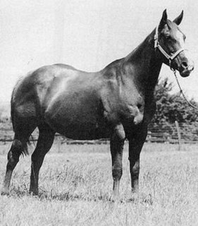 Garretts Miss Pawhuska 20th-century Quarter Horse racehorse mare
