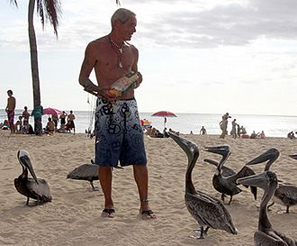 Crash Boat Beach - Pelicans being fed on Crash Boat