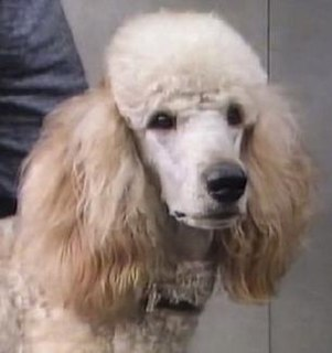 Roly Fictional dog from the BBC soap opera EastEnders