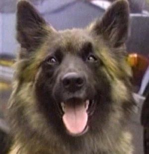 Wellard - Zenna as Wellard in 1994