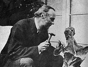 William Fox (palaeontologist) - Fox, preparing a dinosaur specimen
