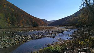 Savage River State Forest - View of Savage River