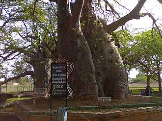 Savanur - Image: Savanur Baobab 06052007317