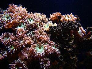 Marine aquarium - Corals in a marine aquarium