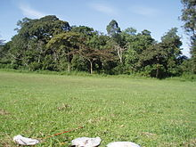Forest edge habitat in Kibale National Park, Uganda