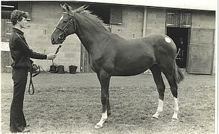 Le Moss Irish-bred Thoroughbred racehorse