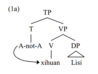 A-not-A question - Grammatical A-not-A operator lowering to adjacent MWd verb xihuan. Xihuan is the closest X'-theoretical head that the A-not-A operator c-commands, thus satisfies lowering conditions.