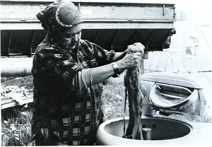 Cowichan knitting - Cowichan knitter Mary Harry washes wool. Koksilah Reserve, 1985.