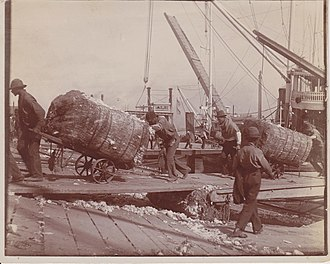 Roustabout - Roustabouts unloading cotton from steamboat ca. 1900.
