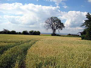 Ven (Sweden) - Image: Ven Field