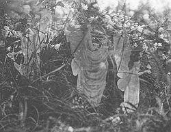 5° et dernière photo des fées de Cottingley