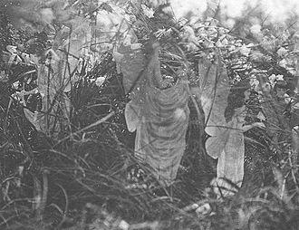Cottingley Fairies - Fairies and Their Sun-Bath, the fifth and last photograph of the Cottingley Fairies
