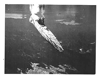 Motorised Submersible Canoe - Image: Sleeping beauty underwater