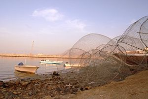 Dibba Al-Hisn - Fishing traps in the old port in Dibba Al-Hisn