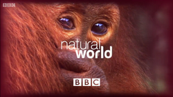 Natural World title card