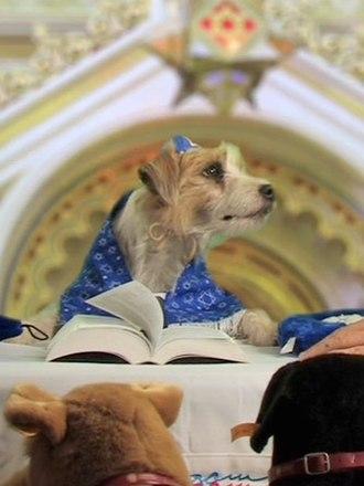 "Bark Mitzvah - Elvis Best ""read"" the Torah at his Bark Mitzvah in 2007."