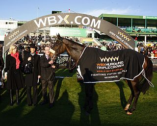 Go Native Irish-bred Thoroughbred racehorse