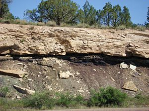 Naturita Formation - Naturita Formation exposed in a roadcut in eastern Utah. A coal seam is visible below its sandstone bed, with a thin volcanic ash (white) layer in its upper portion.