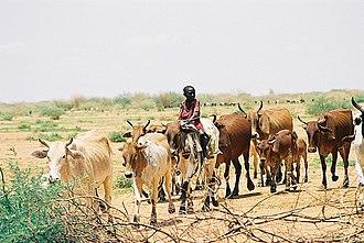 Hawazma tribe - This picture typical of Hawazma Baggara cow boys, in North Kurdufan