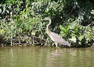 Monkey River river in Belize