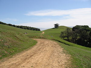 Pleasanton Ridge Regional Park - Distant park rangers on horseback pass olive groves