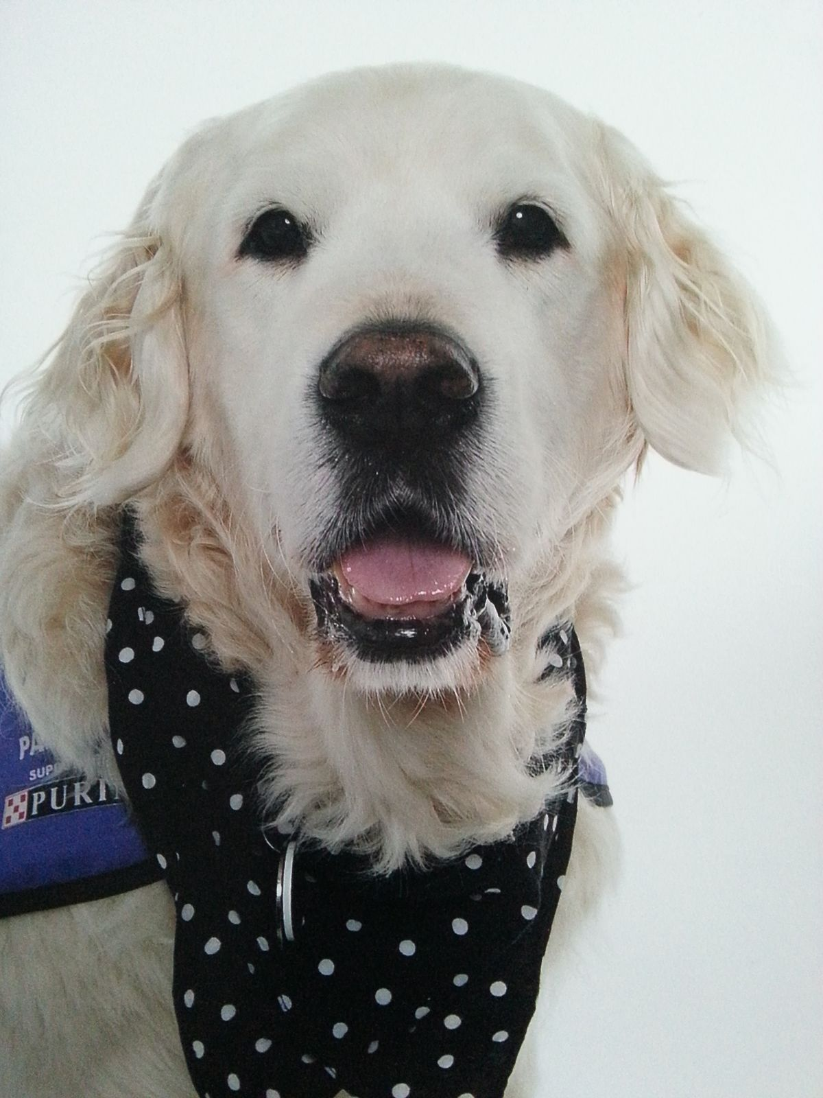 Owner Trained Assistance Dogs Uk