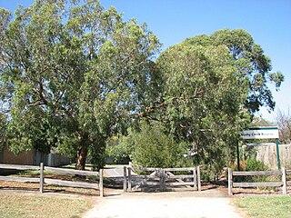 Bushy Creek Trail