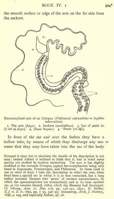 Hectocotyle Arm - a page of Aristotle's History of Animals (D'Arcy Thompson)