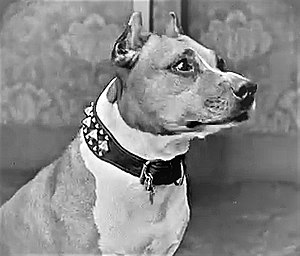 Luke the Dog - Luke (1913-1926) in the Buster Keaton short The Scarecrow, 1920