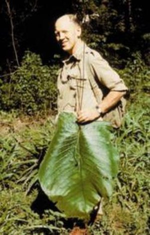 Brian Burtt - Bill Burtt with Streptocarpus grandis leaf in the Nkandla Forest, South Africa