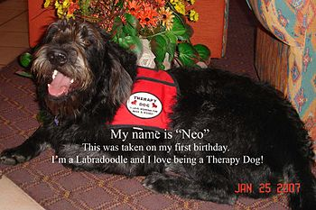 Therapy Dog In Training 1