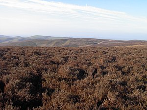 Long Mynd - View from Pole Bank looking north