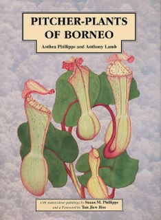 <i>Pitcher-Plants of Borneo</i> book by Anthea Phillipps