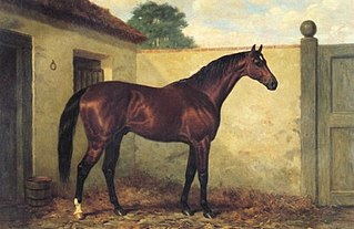 Kingcraft British-bred Thoroughbred racehorse