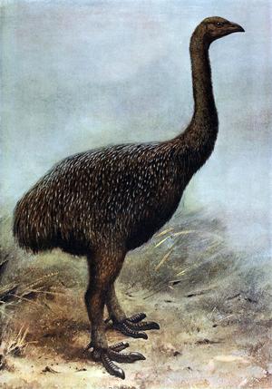 Upland moa - Restoration from 1907